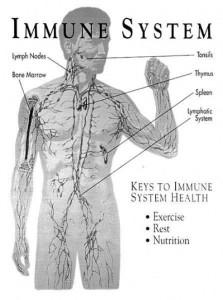 immune-system1